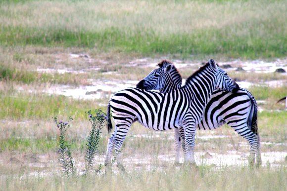 stripes-in-love