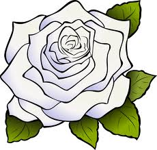 Artwork of white rose.
