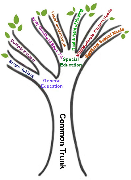 Common Trunk of Teacher Education