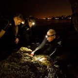 Professor Bill Wright and marine biology students study limpets off Laguna Beach.