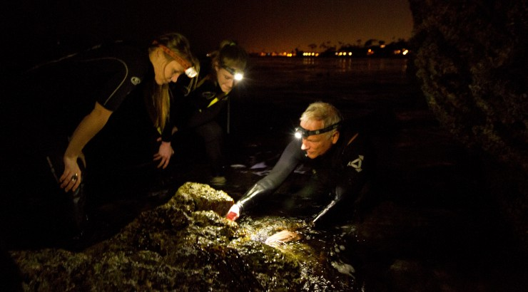 Professor Bill Wright and marine biology students study limpets off Laguna Beach.