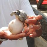 Galapagos 2014 383 (2)