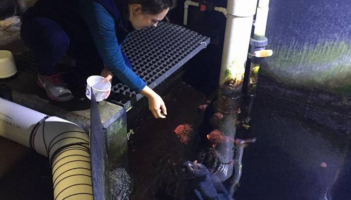 macy dexter at aquarium