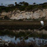 Wildlife in Upper Newport Bay in Newport Beach