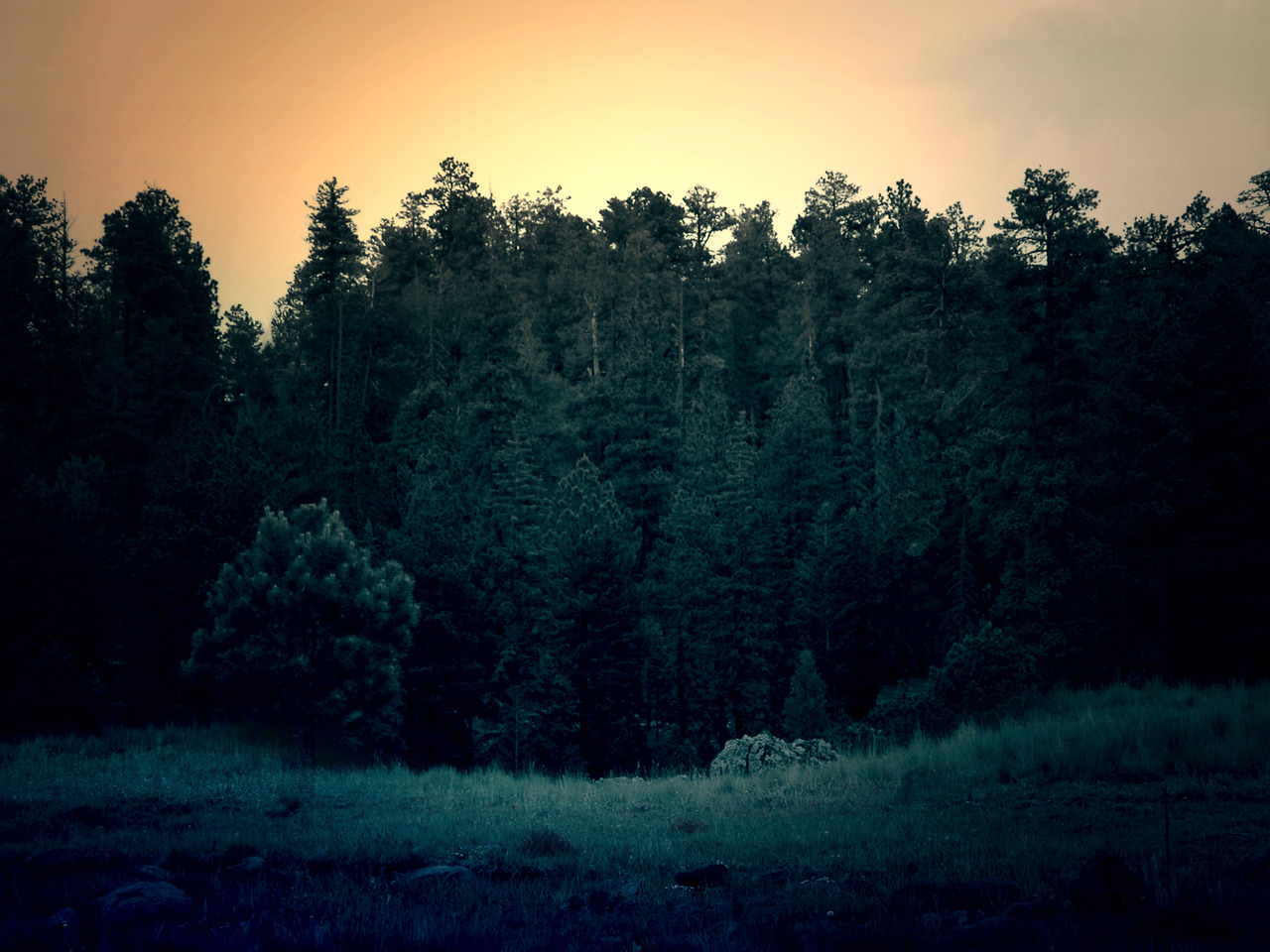 Forest by Julie Geiger
