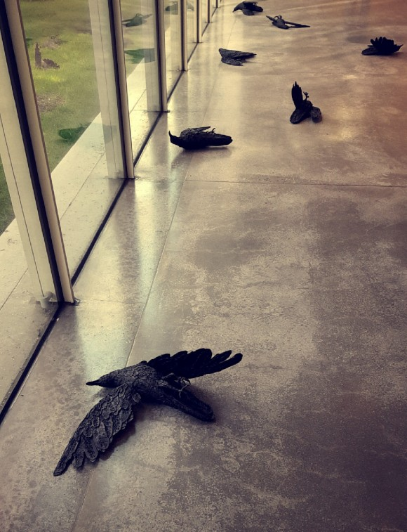 Black crows on the ground