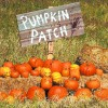 "A detail from McCall's Pumpkin Patch in Moriarty, NM. DEAN HANSON/JOURNAL_10_04_07_""PUMP_B_DLH""_BIZ_RETAIL_REMOTE_12"
