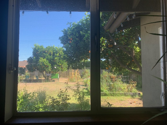 window view of garden boxes, orange trees, and some dry grass