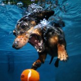 Chapman University alumnus Seth Casteel '03 dives in with the dogs