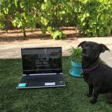 image of laptop on grass next to a small house plant and a small black dog