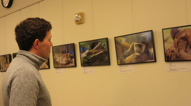 A young man stands looking at framed, displayed photos.