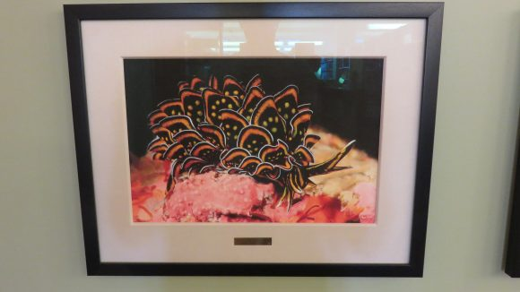 A framed photograph of a black and orange nudibranch.