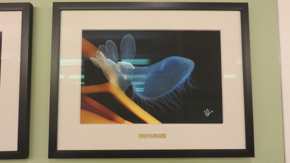 Framed photograph of a bright blue and orange nudibranch.