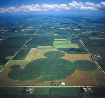 An aerial photograph of a field, with the crops planted to resemble the profile of Mickey Mouse