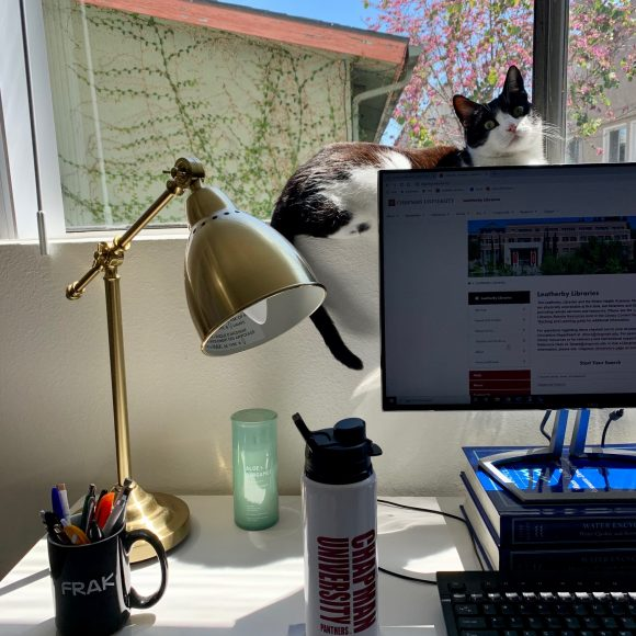 Photo of a desk in front of a window, with part of a computer monitor, a water bottle, and a lamp visible in the foreground, and a black and white cat sitting in the windowsill.