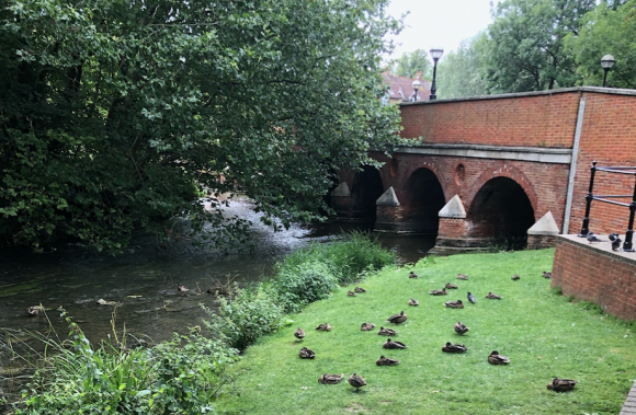 Bridge with water and ducks